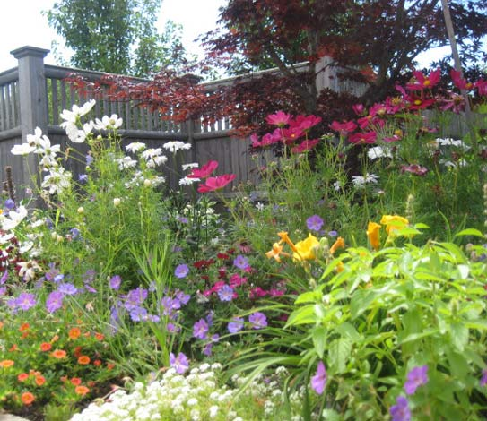 Flower garden with many different and mult-colored flowers, red, white, yellow and purple.