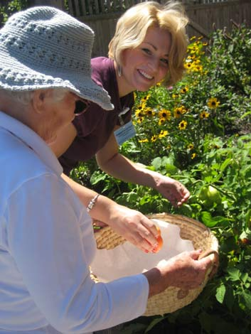 Senior and caregiver picking tomatoes from a garden.